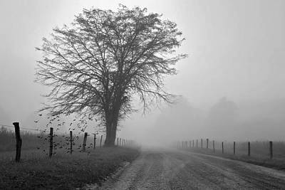 Digital Art - Fog Covered Lane by Lana Trussell