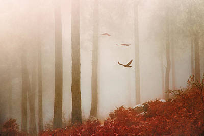 Photograph - Fog by Elena E Giorgi