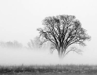 Fog Art Print by Elizabeth Reynders