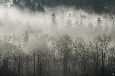 Art Print featuring the photograph Fog Enshrouded Forest by Lisa Knechtel