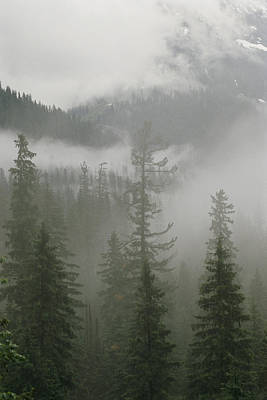 Natural Forces Photograph - Fog Hangs In A Valley Of Evergreens by Raymond Gehman