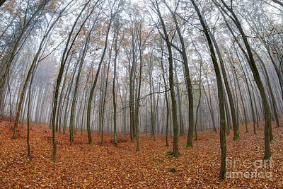Photograph - Fog In Beech Forest In Autumn by Michal Boubin