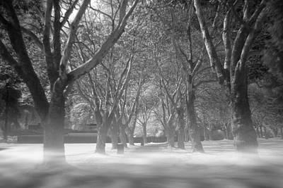 Fog In Stanley Park Original by Julius Reque