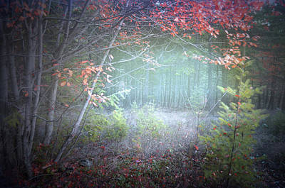Photograph - Fog In The Forest At The End Of October 5 by Tara Turner