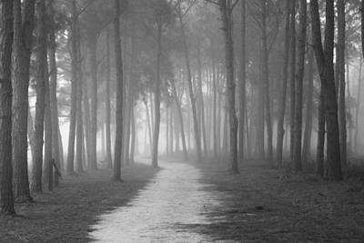 Fog In The Forest Art Print by Gary Bydlo