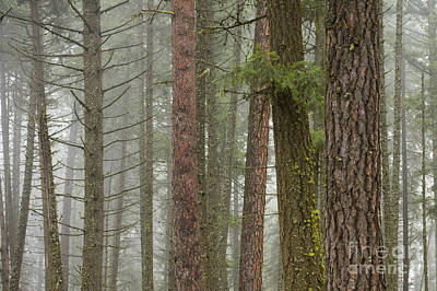 Photograph - Fog In The Forest by Idaho Scenic Images Linda Lantzy