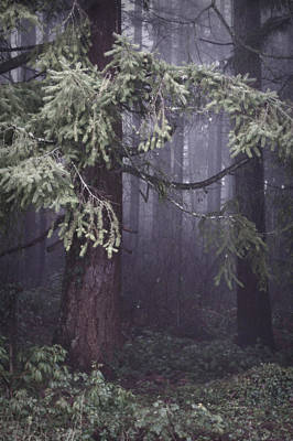 Photograph - Fog In The Forest by Jeanette C Landstrom