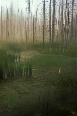 Fog In The Marsh Art Print