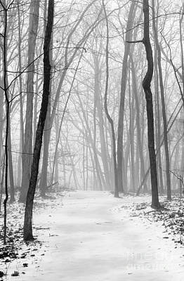 Photograph - Fog In The Woods by Tamara Becker