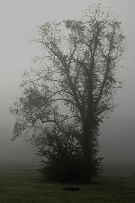Photograph - Fog by Karen Harrison