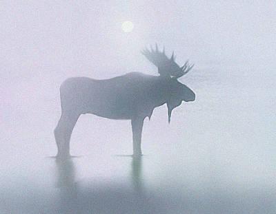 Fog Moose Art Print