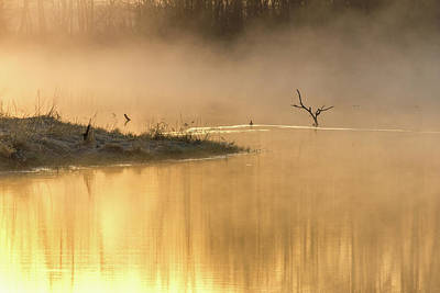 Photograph - Fog On Golden Pond by Penny Meyers