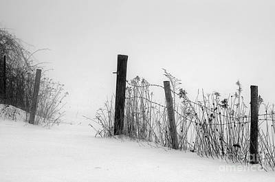 Photograph - Fog On Snow by Sandra Silva