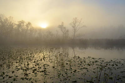 Photograph - Fog On The Beaver Marsh by Ann Bridges