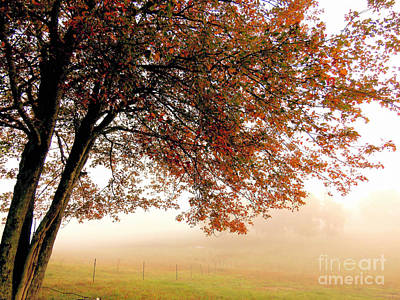 Photograph - Fog On The Farm  by Janice Drew