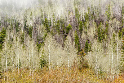 Photograph - Fog On The Trees by Ronda Kimbrow