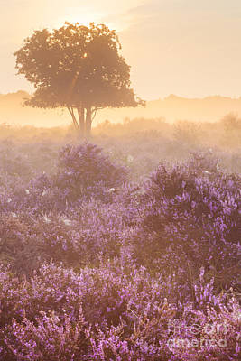 Heather Photograph - Fog Over Blooming Heather Near Hilversum In The Netherlands by Sara Winter
