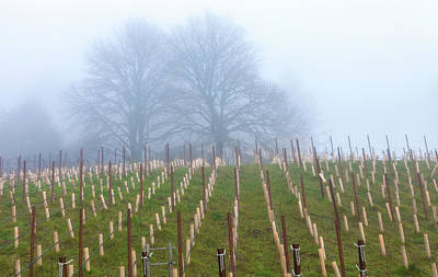 Photograph - Fog Over Grapevines by Jonathan Nguyen