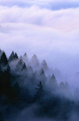 Fog Over Muir Woods Original