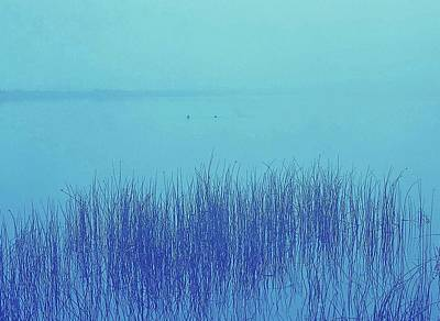 Fog Reeds Art Print by Laurie Stewart