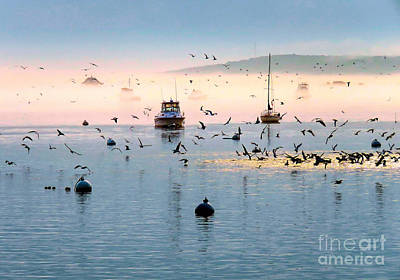 Photograph - Fog, Sea, Sun And Seagulls by Janice Drew