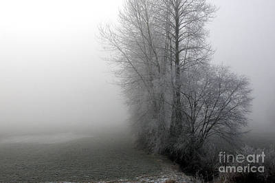 Photograph - Fog by Sharon Talson