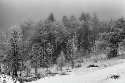 Photograph - Fog-shrouded Forest by Alan Vance Ley