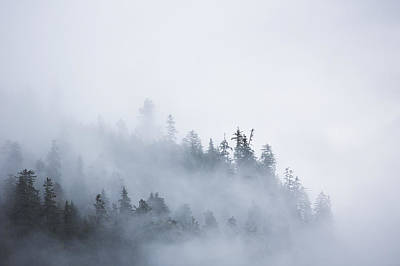 Prince Rupert Photograph - Fog Shrouded Trees Along The British by Robert Postma