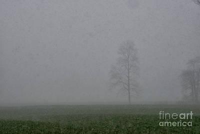 Photograph - Fog Snow Tree by David Arment
