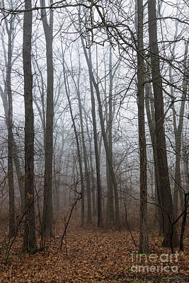 Photograph - Fog Through The Woods by Jennifer White