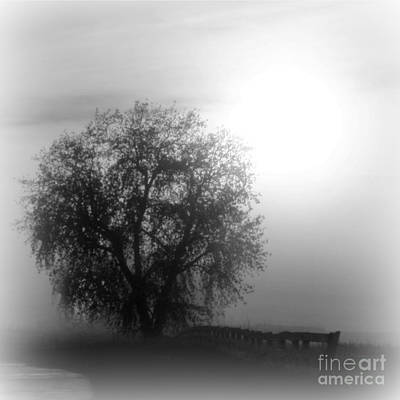 Photograph - Fog Tree by Barbara Henry