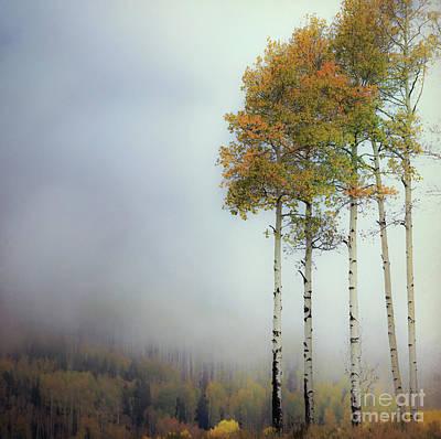Photograph - Foggy Aspen by Doug Sturgess