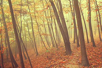 Photograph - Foggy Autumn Forest by Jenny Rainbow