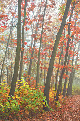 Photograph - Foggy Autumn Forest. Splashes Of Colors by Jenny Rainbow