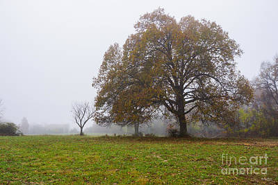 Photograph - Foggy Autumn Morning by Jennifer White