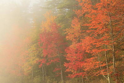 Photograph - Foggy Autumn Morning by John Burk