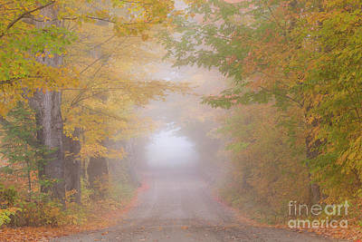 Photograph - Foggy Autumn Road by Alan L Graham