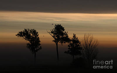 Photograph - Foggy Awakening by Elizabeth Winter