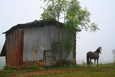 Photograph - Foggy Barn And Horse by Kathryn Meyer
