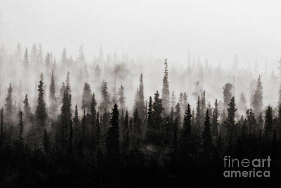 Photograph - Foggy by Bitter Buffalo Photography