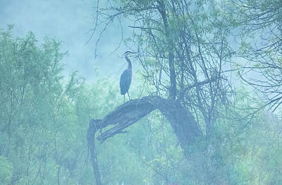 Photograph - Foggy Blue by Kelly Marquardt