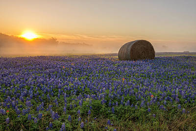 Photograph - Foggy Bluebonnet Sunrise - Independence Texas by Brian Harig