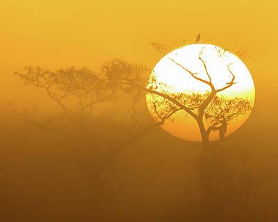 Photograph - Foggy Central Florida Wetlands Sunrise by Stefan Mazzola
