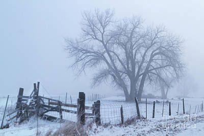 Photograph - Foggy Country Morning by Ronda Kimbrow