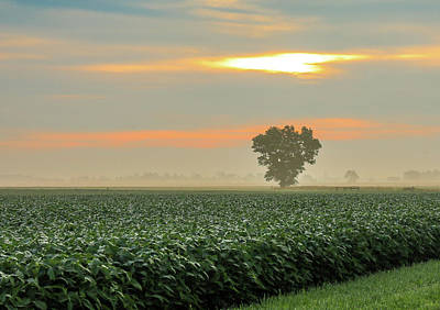 Photograph - Foggy Country Sunrise by Dan Sproul