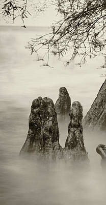 Photograph - Foggy Cypress Triptych 1 - Left Panel by Andy Crawford