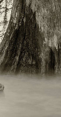 Photograph - Foggy Cypress Triptych 1 - Middle Panel by Andy Crawford