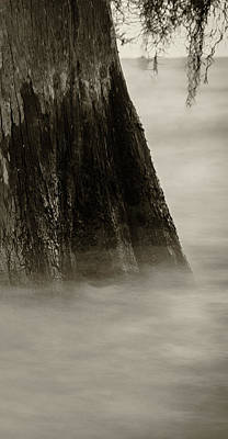 Photograph - Foggy Cypress Triptych 1 - Right Panel by Andy Crawford
