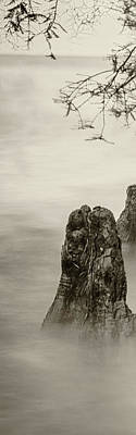 Photograph - Foggy Cypress Triptych 2 - Left Panel by Andy Crawford