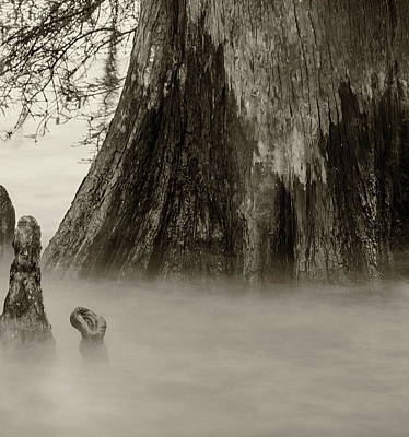 Photograph - Foggy Cypress Triptych 2 - Middle Panel by Andy Crawford